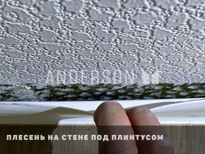 плесень на стене застройщик пик
